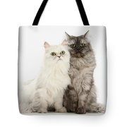 Female Cats Tote Bag
