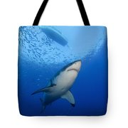 Female Great White, Guadalupe Island Tote Bag