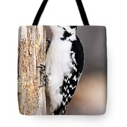 Female Hairy Woodpecker Tote Bag