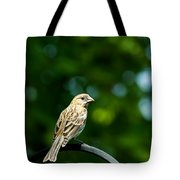 Female House Finch Perched Tote Bag