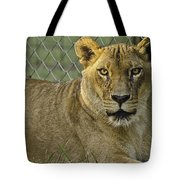 Female Lion Tote Bag