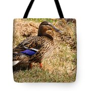 Female Mallard On A River Bank In Alaska Tote Bag