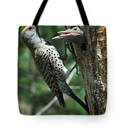 Female Northern Flicker Colaptes Tote Bag
