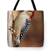 Female Red-bellied Woodpecker 5 Tote Bag