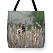 Female Redwinged Blackbird Tote Bag