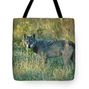 Femle Gray Wolf In The Morning Light Tote Bag