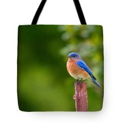 Fence Post Bluebird Tote Bag
