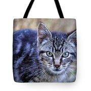 Feral Kitten Tote Bag