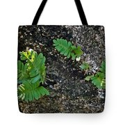 Fern And Coquina Tote Bag