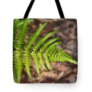 Fern Frond 1 Tote Bag
