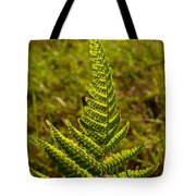 Fern Frond And Sporangia 1 Tote Bag