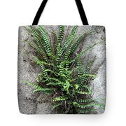 Fern Growing From Crack In Limestone Tote Bag