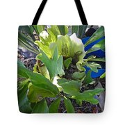 Fern With Blue Bucket Tote Bag