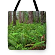 Ferns And Redwoods Tote Bag