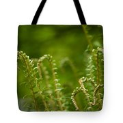 Ferns Fiddleheads Tote Bag