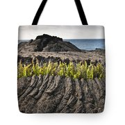 Ferns Growing From A Crack In The Lava Tote Bag