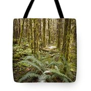 Ferns Sit On The Forest Floor Tote Bag