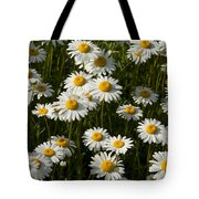 Field Of Oxeye Daisy Wildflowers Tote Bag