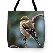 Finch In An Ice Storm Tote Bag