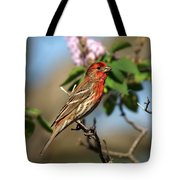 Finch In Lilac Bush Tote Bag