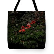 First Fall Colors At Night Tote Bag
