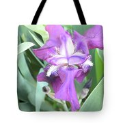 First Iris Of The Spring Tote Bag