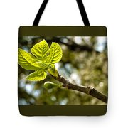 First Leaves And Fig  Tote Bag