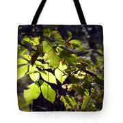 First Morns Light Tote Bag