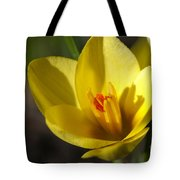 First Yellow Crocus Tote Bag