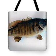 Fish Mount Set 10 A Tote Bag