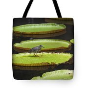 Fisher Bird On Giant Lily Pad In Pond Tote Bag