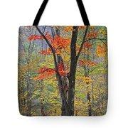 Flaming Fall Foliage Tote Bag