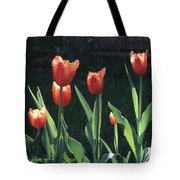 Flared Red Yellow Tulips Tote Bag