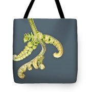 Flashlit Fern Tote Bag