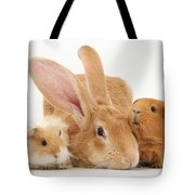Flemish Giant Rabbit With Guinea Pigs Tote Bag