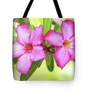Floral Background. Desert Rose. Tote Bag