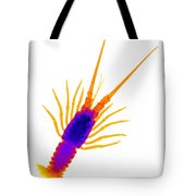 Florida Spiny Lobster X-ray Tote Bag