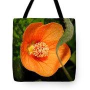 Flowering Maple Single Flower 2 Tote Bag