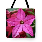 Flowering Tobacco Tote Bag