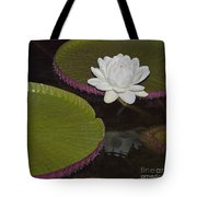 Victoria Amazonica White Flower Tote Bag