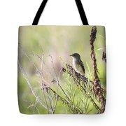 Flycatcher On A Twig Tote Bag