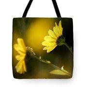 Focos De Luz Tote Bag