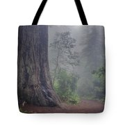 Fog And Redwoods Tote Bag