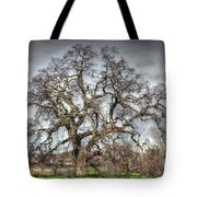 Folsom Oak Tree Tote Bag