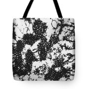 Foot And Mouth Disease Tote Bag