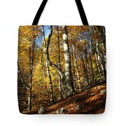 Forest Fall Colors 4 Tote Bag