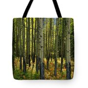 Forest Floor In Autumn, Bow Valley Tote Bag