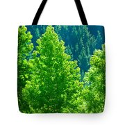 Forest Illuminates In The Sunlight  Tote Bag
