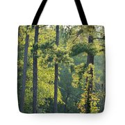 Forest Illumination At Sunset Tote Bag