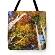 Forest In Autumn Bavaria Germany Tote Bag